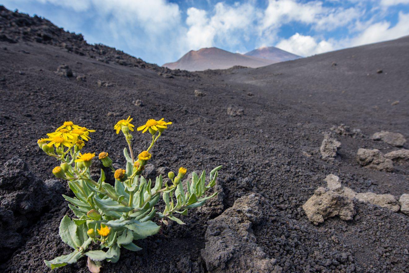 Grotta vulcanica